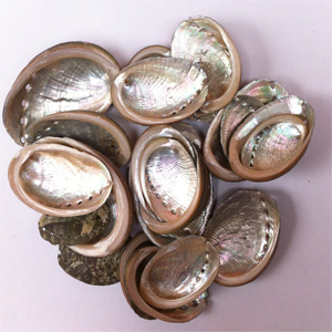 Abalone Shell mostly 1 to 2 inch 100g. Bag  approx. 50 shells