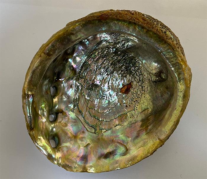 Abalone Shell 3 inch