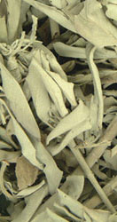California white sage, 1lb. Bag