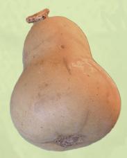 Bell gourd. 8 x 4cms. approx